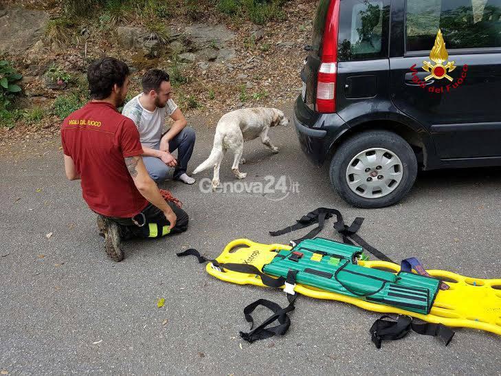 Cane salvato dai vigili del fuoco