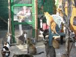 gattile enpa albissola