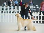 L'esposizione canina Pro Plan® Puppy Cup