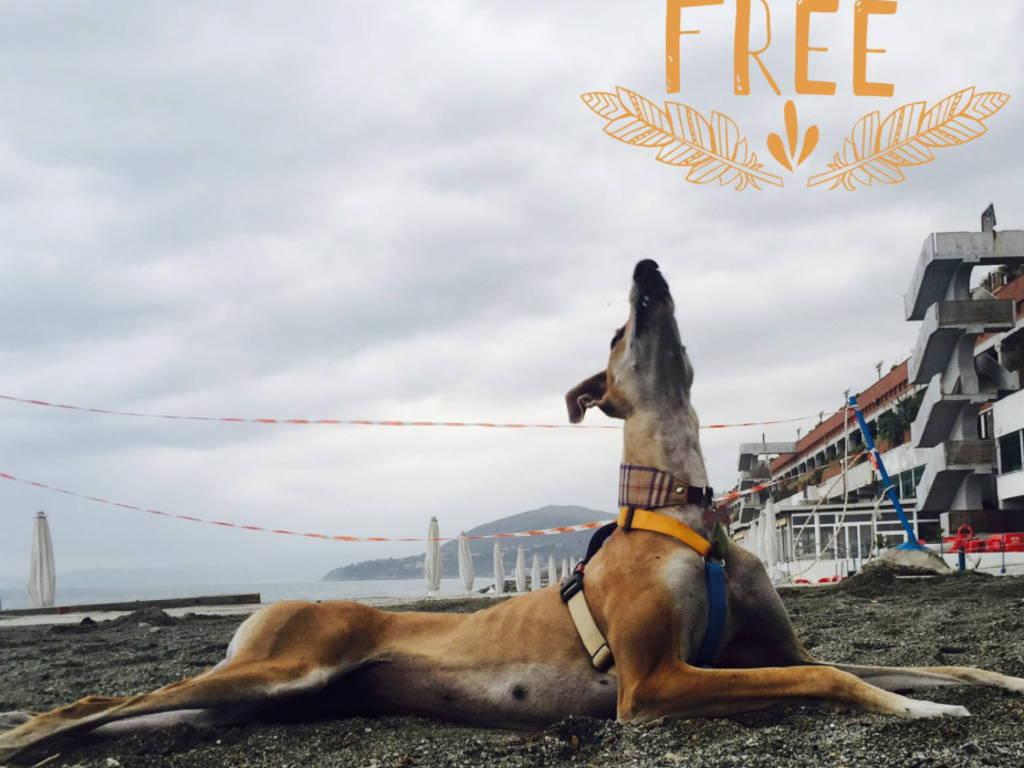 pet levrieri contro la soppressione dei cani