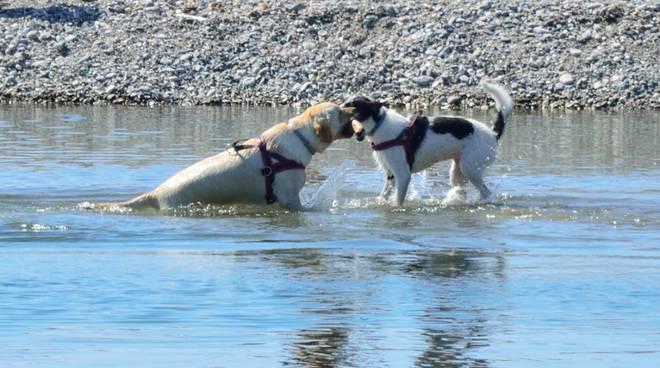 cani spiaggia vadino