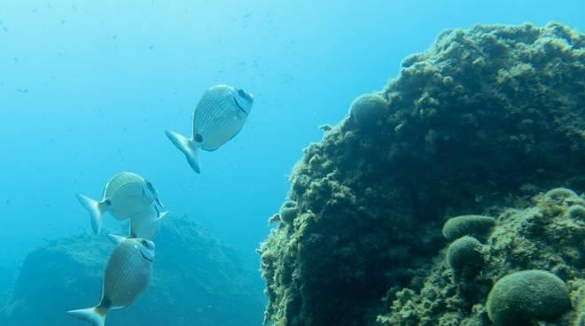 Escursione guidata di snorkeling  alle Falesie ed alla Grotta Marina di Bergeggi