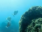 Escursioni guidate snorkeling Area Marina Protetta Isola di Bergeggi