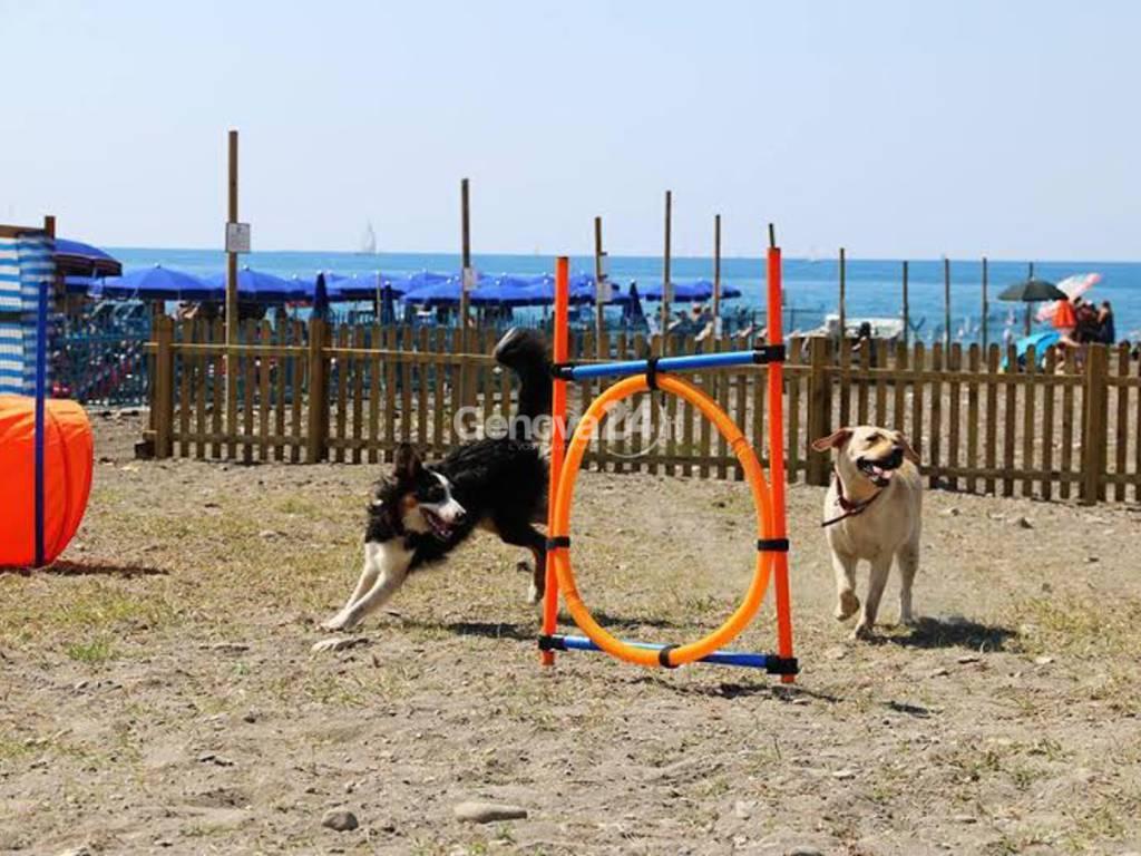 Spiaggia per cani Lido di Fido