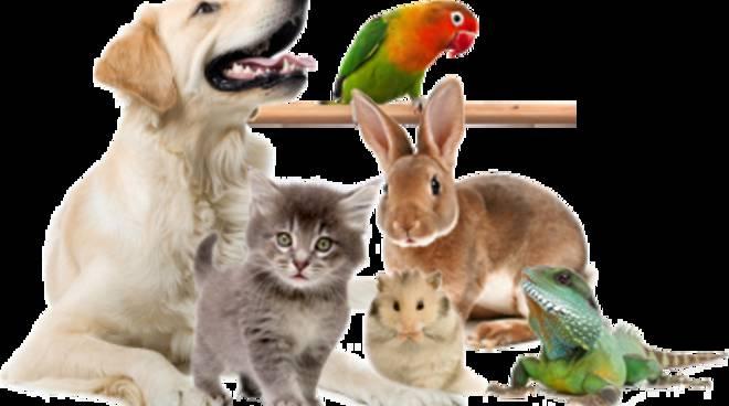 animali apericena