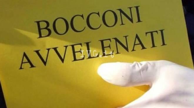 Enpa Bocconi Avvelenati