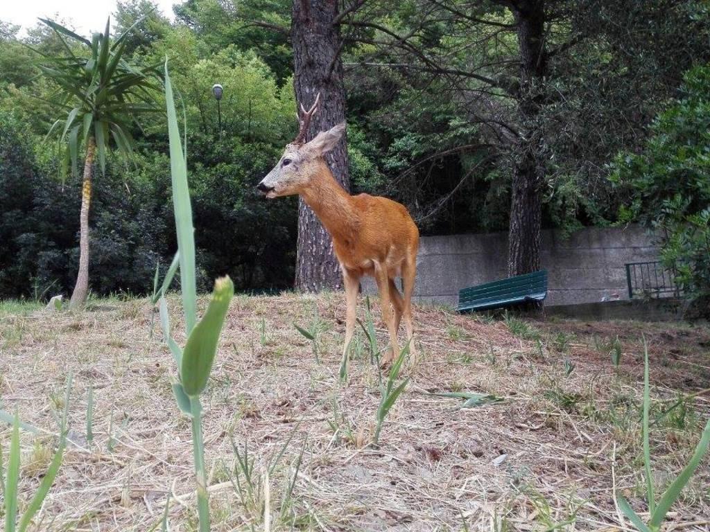 bambi colle ometti