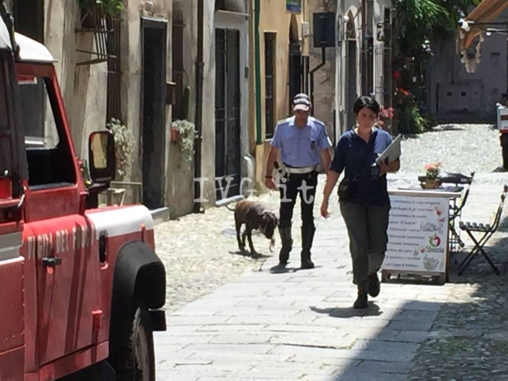 Finale Ligure, cane imprigionato salvato da vigili e pompieri