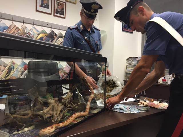 pitone spacciatore bogliasco carabinieri