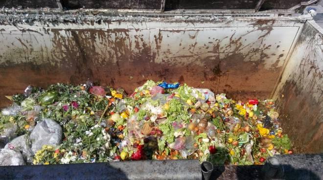 volpara rifiuti