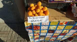 albicocche gratis
