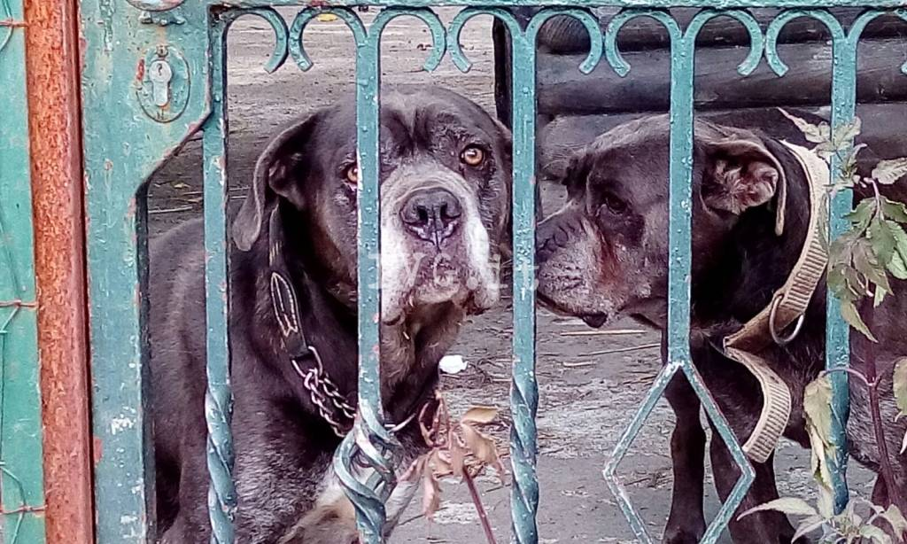 Cani imprigionati in via San Paolo a Boissano