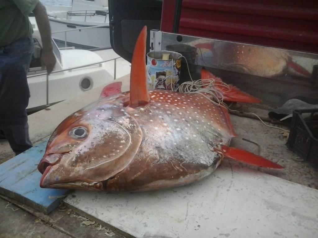 Pesca eccezionale