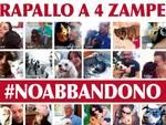 Manifesto contro l'abbandono di cani e gatti