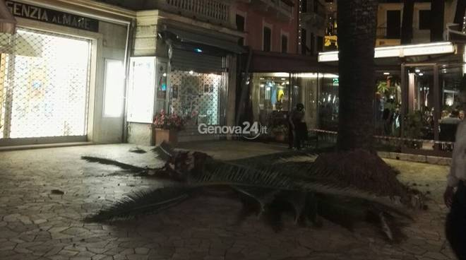 Palma caduta sul lungomare di Rapallo