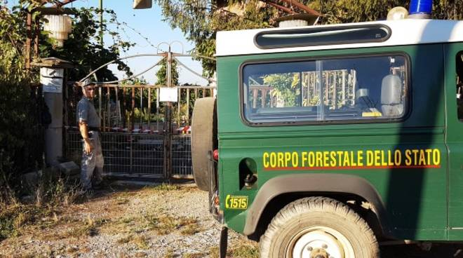 sequestro forestale