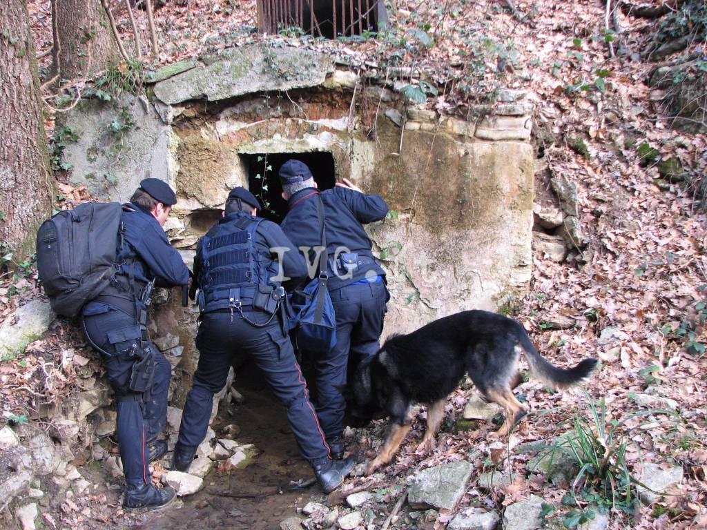 """Stella, scoperta dai carabinieri un'altra """"piantagione"""" di marijuana"""