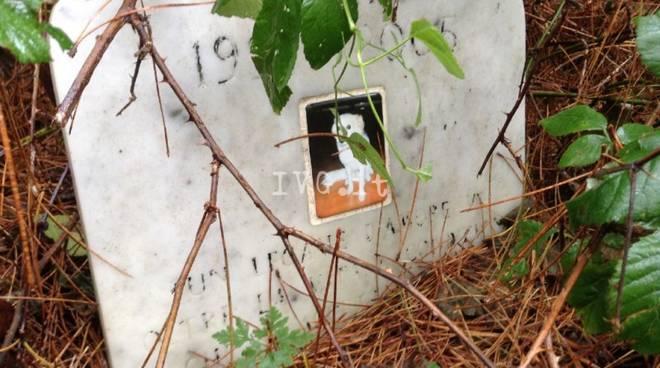 cimitero cani