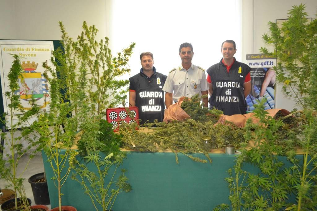 Quiliano, la finanza scopre una piantagione di cannabis
