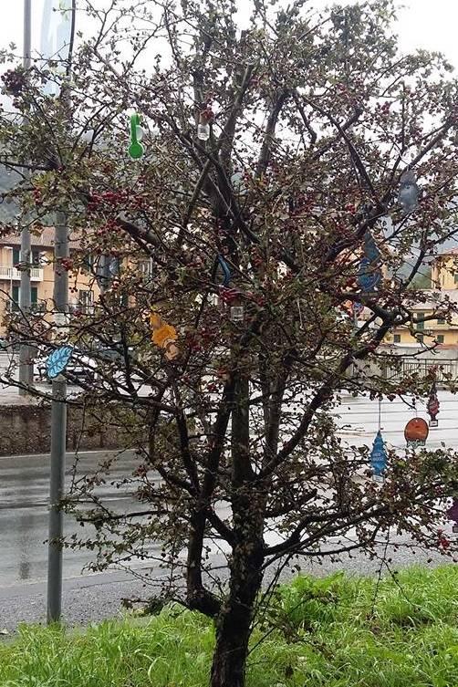 albero con arbre magique foto da il corriere di struppa