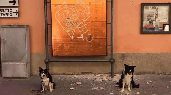 cani terremoto Norcia