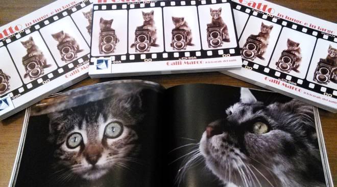 libro gatti