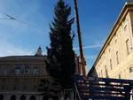 albero di natale piazza de ferrari