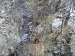 Cane scivola e precipita in un dirupo nei boschi di Rialto