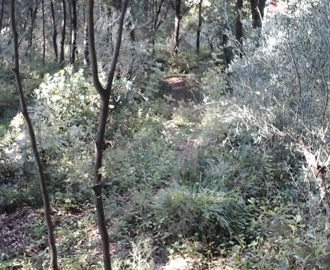 Degrado nel Parco di Montepagano a Sestri Levante