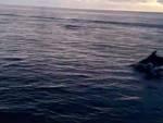 branco delfini