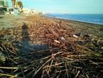 detriti sulla spiaggia