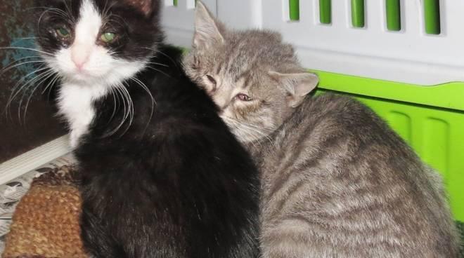 gatti quiliano