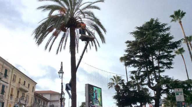 Albenga Palme
