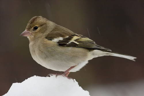 neve animali