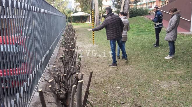 Siepi potate ad altezza bimbo nell 39 asilo di borghetto for Siepi sempreverdi alte