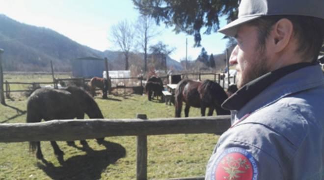 Cavalli sequestrati