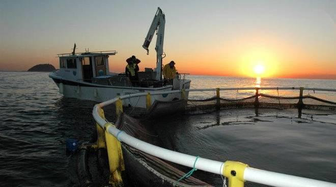 itticoltura alassio