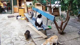 Gattile Enpa Albissola Amico Gatto