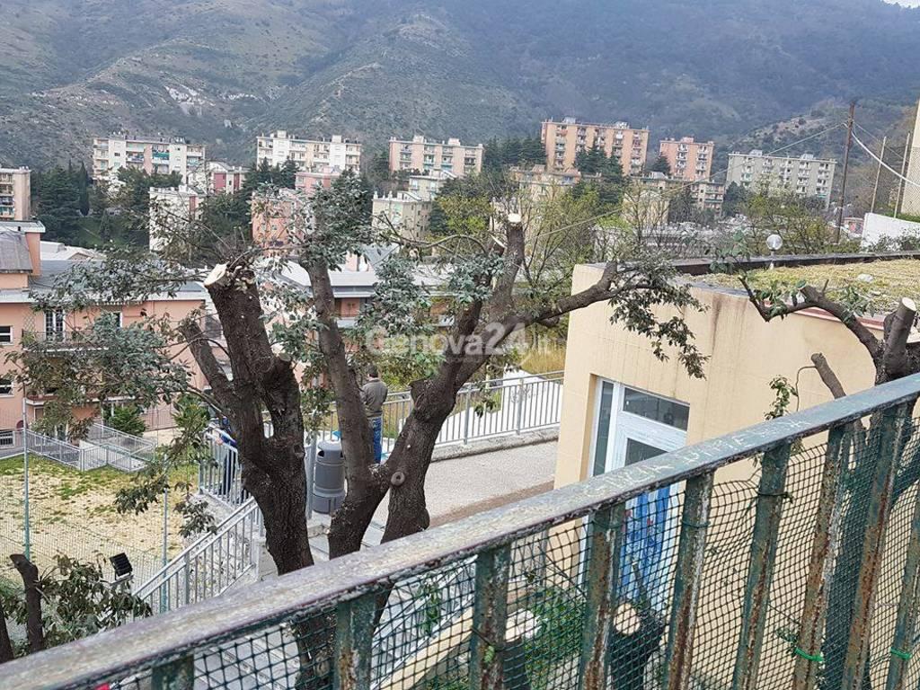 I volontari potano gli alberi alla rotonda di Oregina