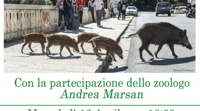 Cinghiali in città- fauna selvatica in ambiente urbano