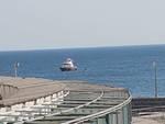 cinghiale mare corso italia
