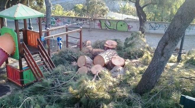 pini parco san rocco