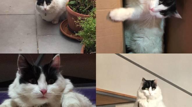 pippo gatto smarrito
