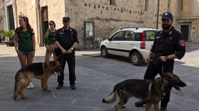 Albenga, i cinofili dei carabinieri setacciano il centro
