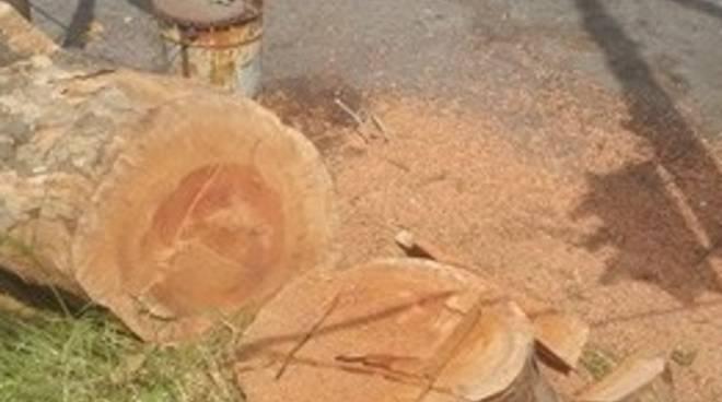 albero tagliato corso sardegna