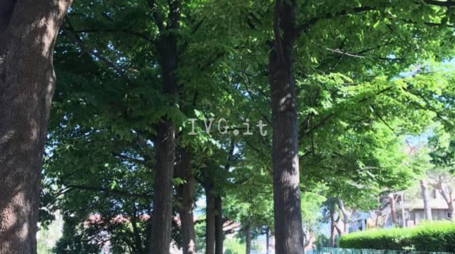 Che cos\'ha il comune di Albisola Superiore contro gli alberi?