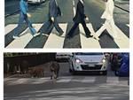 Cinghiali Beatles