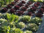 costa verde azienda agricola