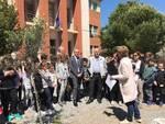 """Le classi quinte delle """"Paccini"""" donano un olivo alla scuola scuola"""