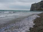 Le spiagge invase dalle lumache di mare